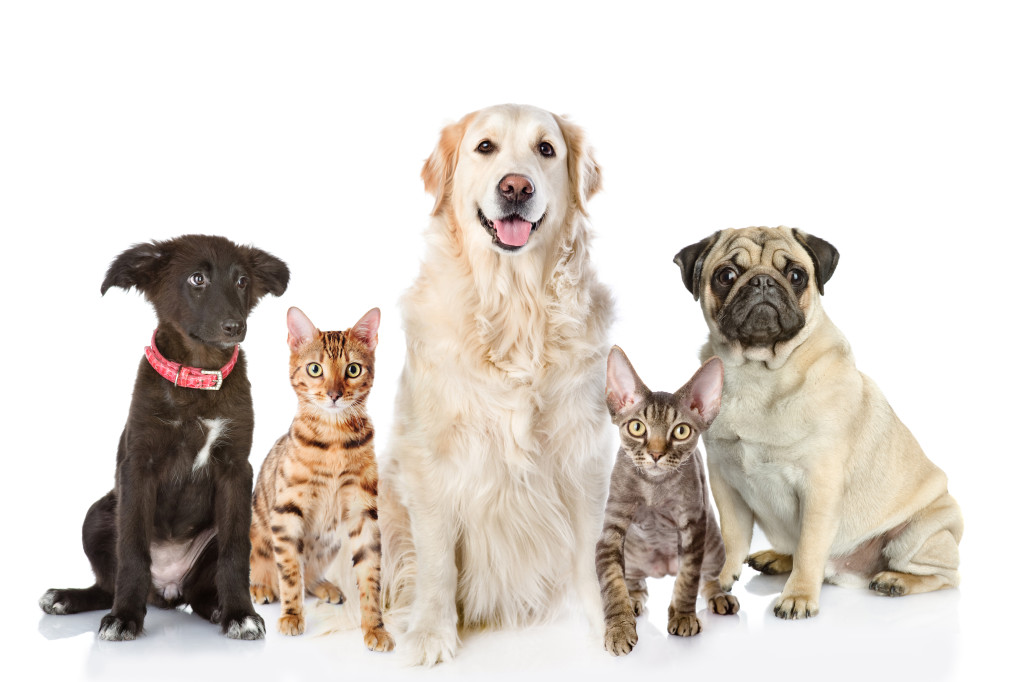 Large group of cats and dogs in front. looking at camera. isolat